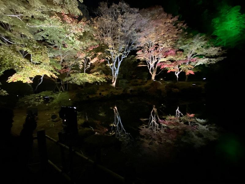 円通院のライトアップ逆さもみじの写真