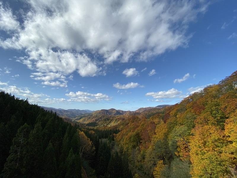 iPhone 11proで撮影の紅葉の今日の一枚